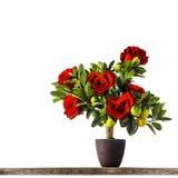 Roses en forme de coeur Photographie stock libre de droits