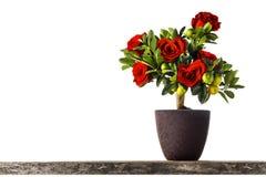 Roses en forme de coeur Photos libres de droits
