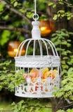 Roses en pastel dans la cage à oiseaux blanche de vintage Image stock