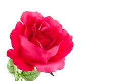 Roses en plastique photo stock