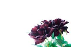 Roses en soie Photos libres de droits
