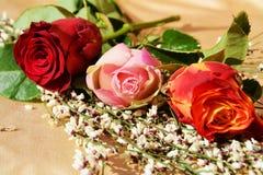 Roses et beauté de nature Photo stock