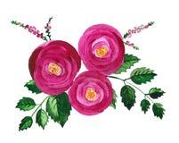 Roses et bruyère Image libre de droits