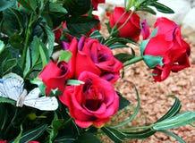 roses Roses roses et feuilles vertes, image naturelle Images stock