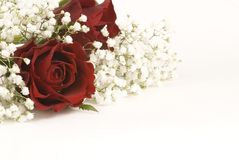 Roses et Gypsophila rouges Photos stock