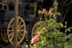 Roses et vieux chariot couvert photographie stock libre de droits