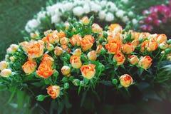 Roses exotiques des variétés modernes roses d'élite dans le bouquet comme cadeau Fond Foyer sélectif photographie stock libre de droits