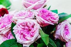 Roses exotiques des variétés modernes roses d'élite dans le bouquet comme cadeau Fond Foyer sélectif images libres de droits