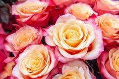 Roses exotiques des variétés modernes roses d'élite dans le bouquet comme cadeau Fond Foyer sélectif photo libre de droits