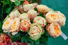 Roses exotiques des variétés modernes d'élite vert-rose dans le bouquet comme cadeau Fond photographie stock libre de droits