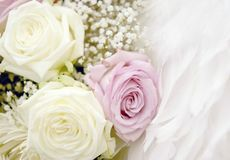 Roses and Feathers. Setting, soft portrait lens filter Royalty Free Stock Photo