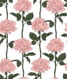 Roses fleurissantes tirées par la main Configuration sans joint avec les roses roses Illustration de vecteur Photo libre de droits