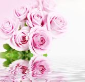 Roses in flood Royalty Free Stock Photo