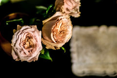 Roses on the floor. With black background Royalty Free Stock Photos