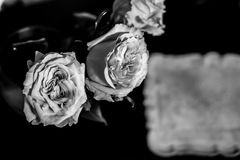 Roses on the floor. Black and white Royalty Free Stock Photo