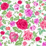 Roses, floral background, seamless pattern. Stock Photo