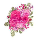 Roses floral bouquet Stock Image