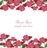 Roses floral card. Vector rose flowers banner Stock Photos