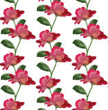 Roses floral pattern Vector rose flowers texture Royalty Free Stock Images