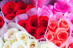 Roses Flower. Flowers gift with all season for some special Stock Image