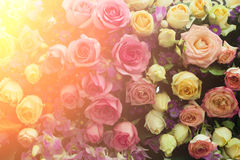 Roses flower bouquet in vintage and light leak color style for v Stock Photography
