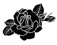 Roses flower and bud. Vector illustrations of roses flower and bud Royalty Free Stock Image