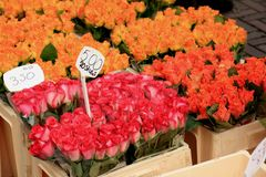 Roses at a flower market Royalty Free Stock Photography