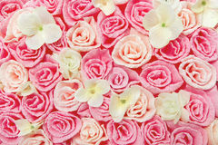 Roses flower pattern background. Floral texture. Stock Photo