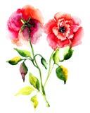 Roses flower Stock Photo
