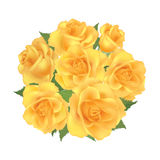 Roses. Flower rose posy isolated on white background Royalty Free Stock Photos
