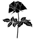 Roses flower silhouette Stock Image