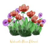 Roses flower watercolor. Floral watercolor element with beautiful gradation. Floral plant watercolor illustration stock illustration