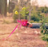 Roses in the flowerpot. A flowepot with two roses and pink ribbon is holding by the girl's hand Royalty Free Stock Image