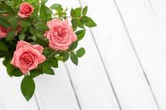 Roses in flowerpot Stock Photos