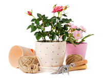 Roses in a flowerpots and garden tools. Beautiful pink roses in a flowerpots and garden tools royalty free stock photo