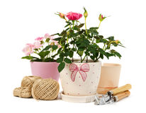 Roses in a flowerpots and garden tools Royalty Free Stock Photography
