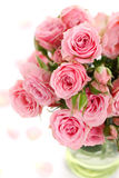 Roses flowers pink rose flower Royalty Free Stock Photo