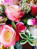 Roses flowers Stock Photo