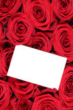 Roses flowers on Valentine's or mothers day with empty greeting Royalty Free Stock Image