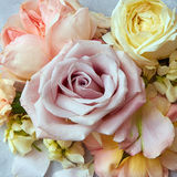 Roses flowers in vintage color style Royalty Free Stock Image