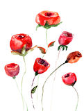 Roses flowers, watercolor illustration Royalty Free Stock Image