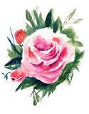 Roses flowers, watercolor painting. Roses flowers with leaves, watercolor painting Royalty Free Stock Photography