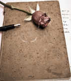 Roses and a fountain pen. On an old scrapbook Stock Photos