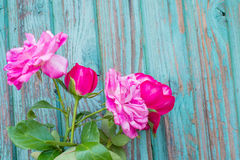 Roses. Four pink roses on a wooden background Royalty Free Stock Images