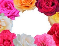 Roses frame Royalty Free Stock Image