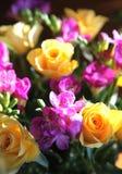 Roses and fressias Stock Photos