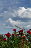 ROSES AND FRIGATE. Roses on Kosciuszko Square and sailing Stock Images