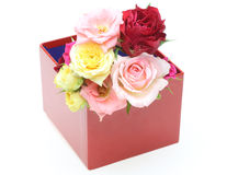 Roses in a gift box in a white background Royalty Free Stock Photography