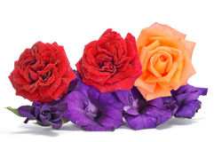 Roses and gladioulus Royalty Free Stock Image