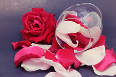 Roses in a glass. On blackground Royalty Free Stock Images